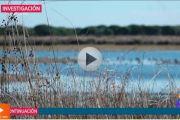 Pozos ilegales en Doñana